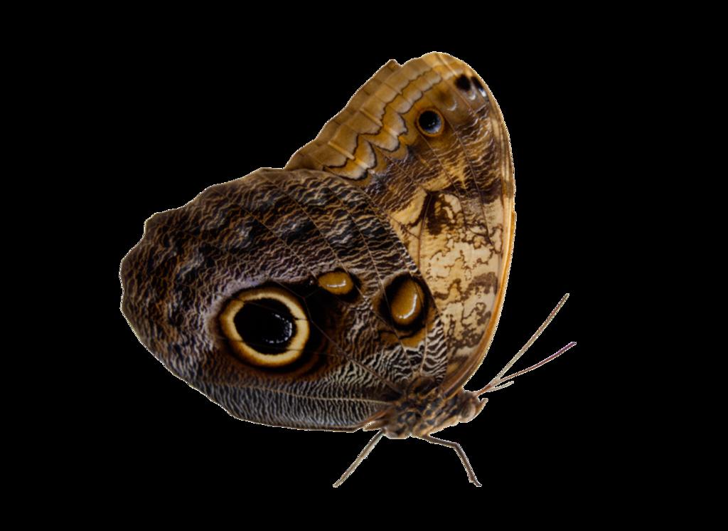 Pin By Laurennn On Pngs Moth Png Art