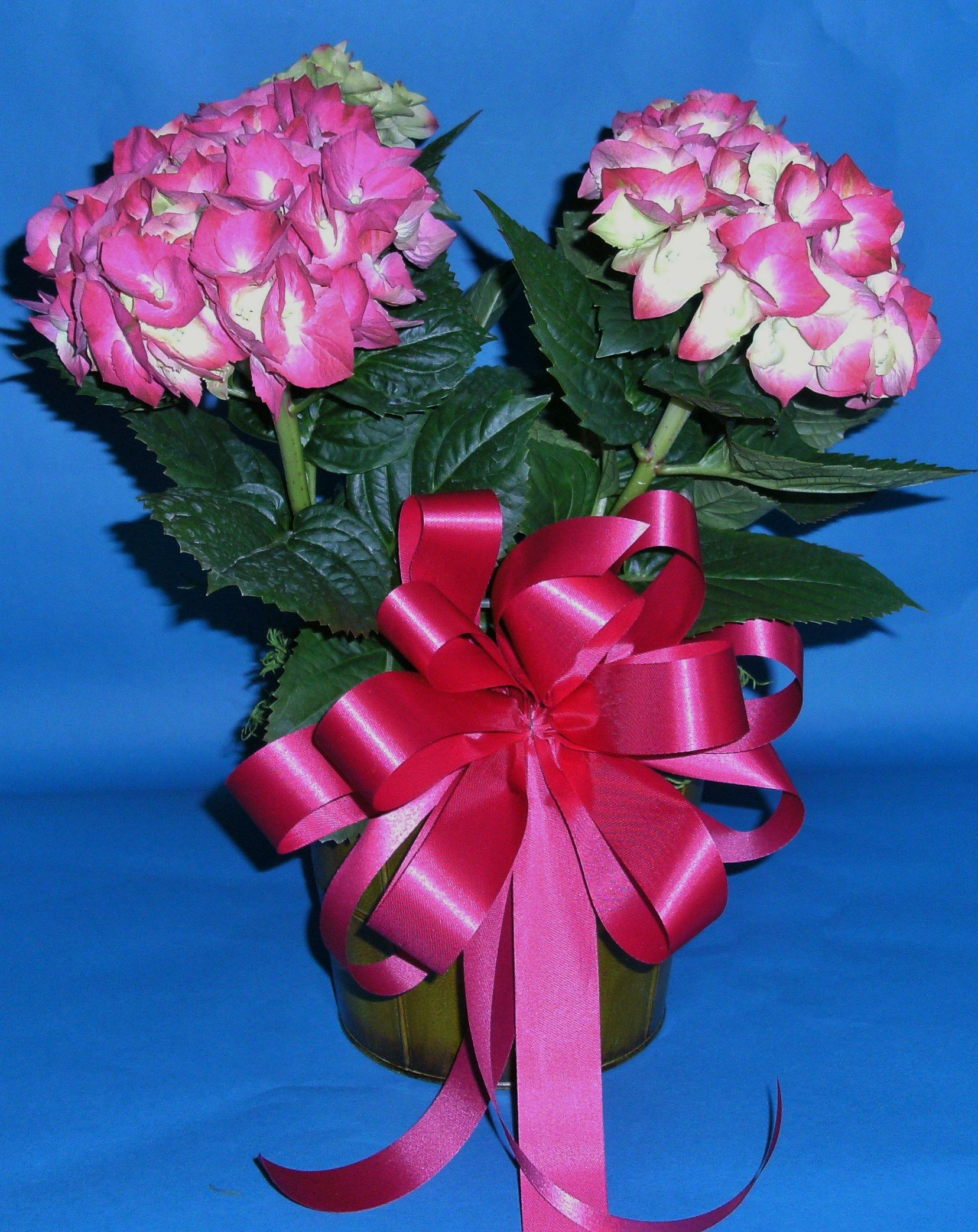 PINK HYDRANGEA IN GREEN METAL IN CONTAINER