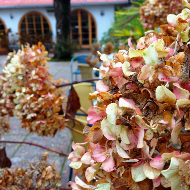 Flores de invierno.