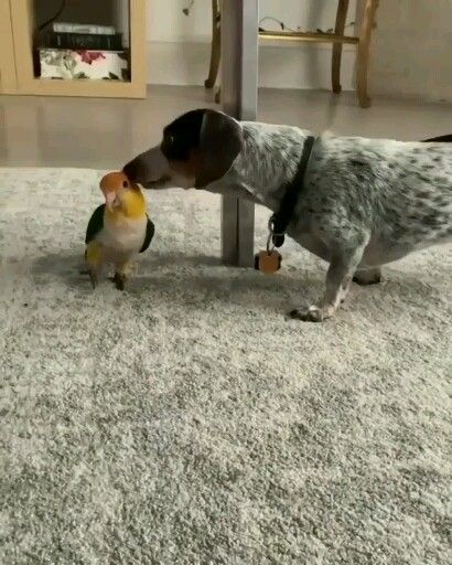 Photo of A Cute Dog Playing With A Parrot 😘