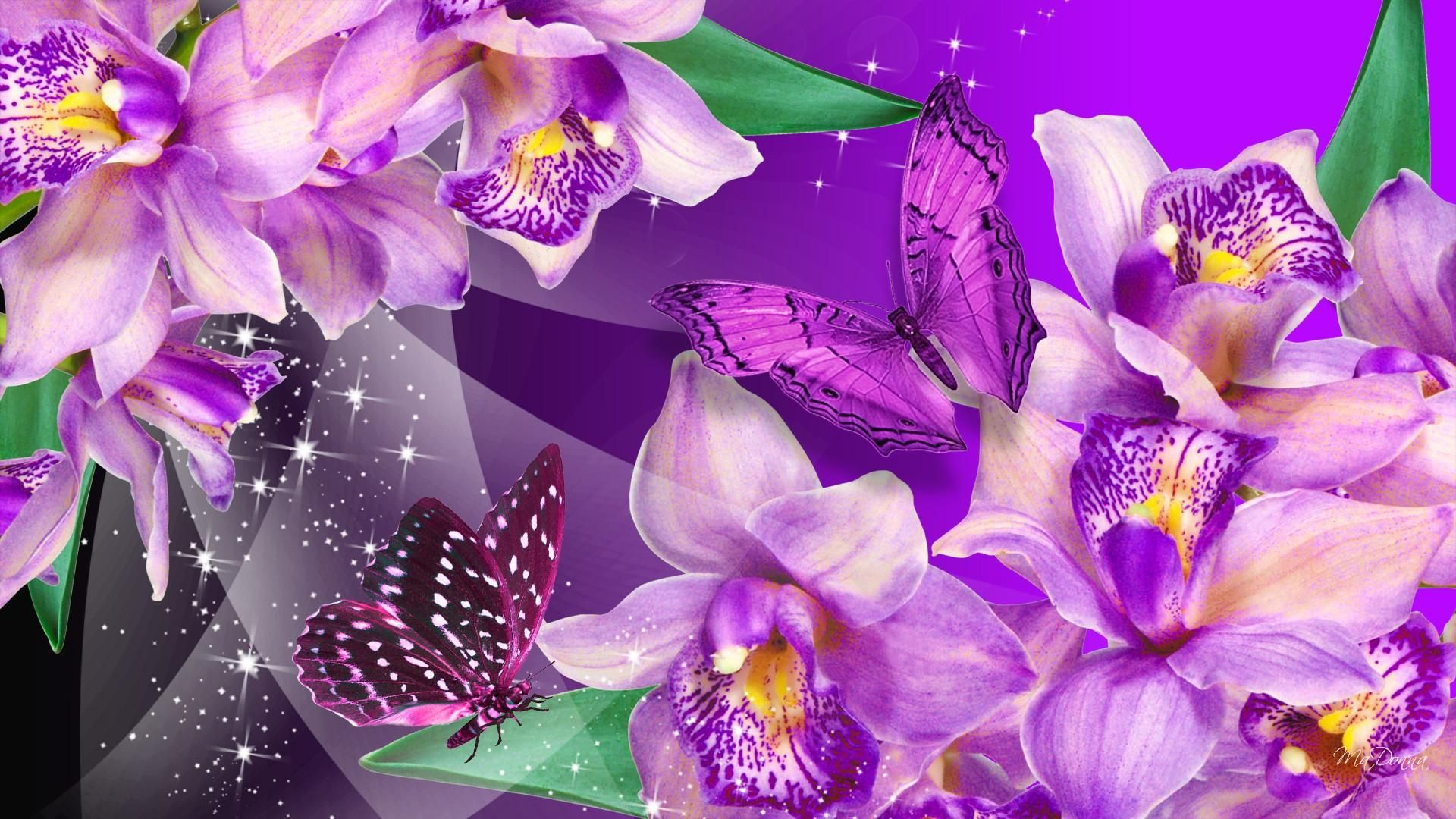 Wallpaper download free image search hd - Purple Butterfly Are Free To Fly Hd Orchid Butterfly Dance Wallpaper