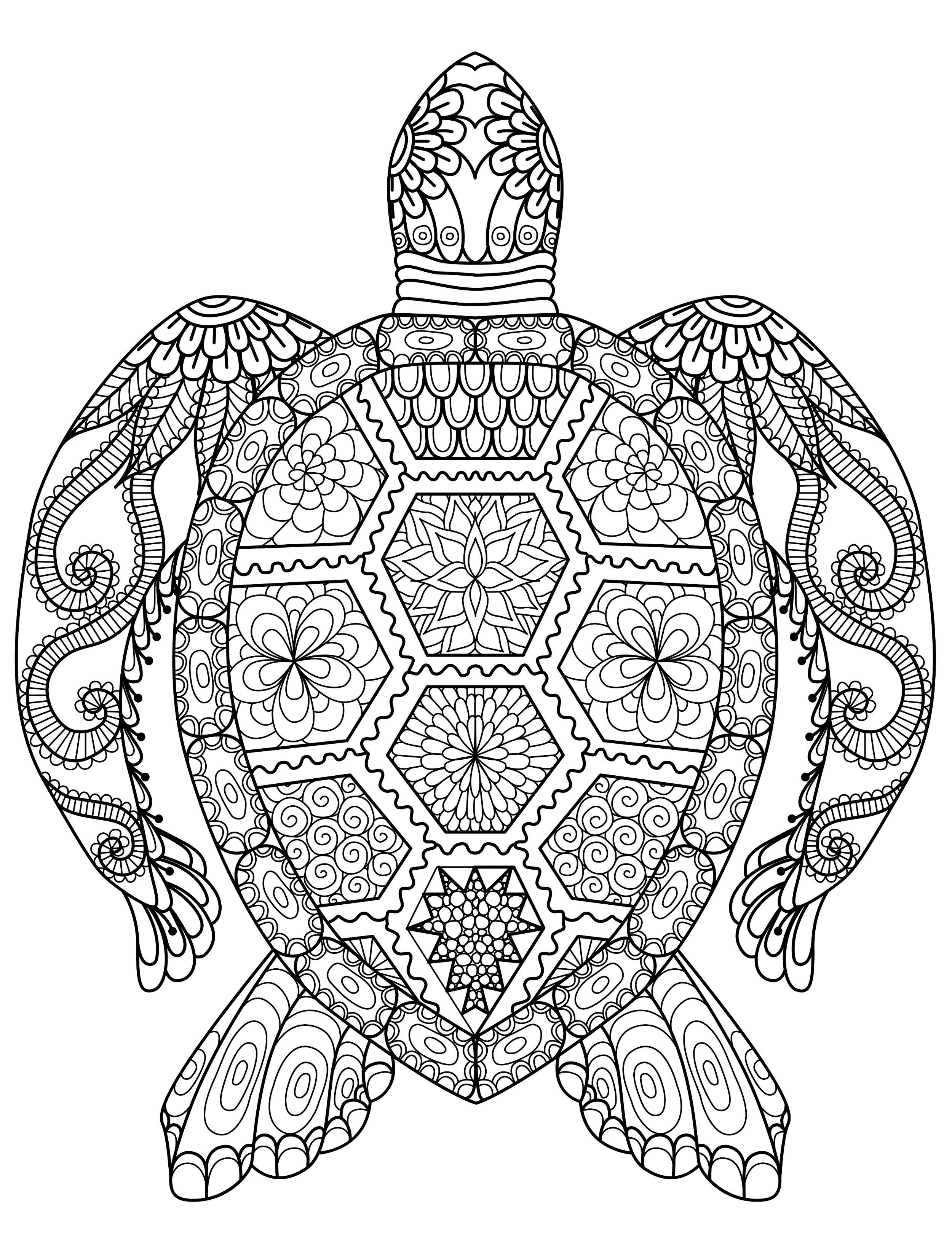 sea turtle coloring page for adults for free download … | jan | Pinte…