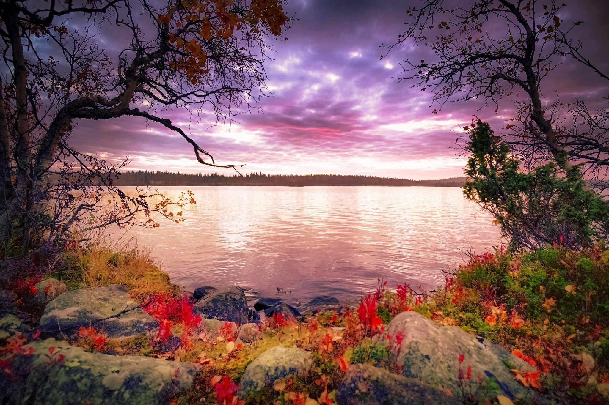 Lakes Autumn Morning Plants Fall Tranquility Sky Beautiful