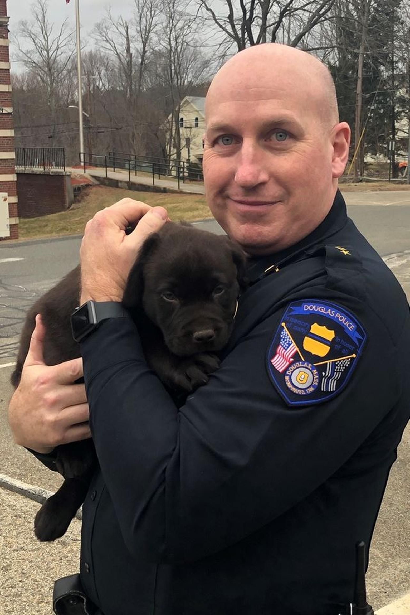 Cutest Cop Finn Joins Douglas Pd As Comfort Dog Labrador