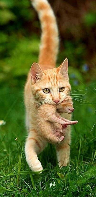 ภเgคk ค๓ Susse Katzen Bilder Katzen Bilder Lustige Katzen