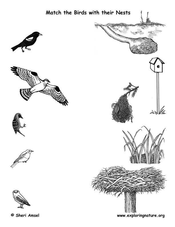 match the birds with their nests animals birds birds fourth grade science science. Black Bedroom Furniture Sets. Home Design Ideas