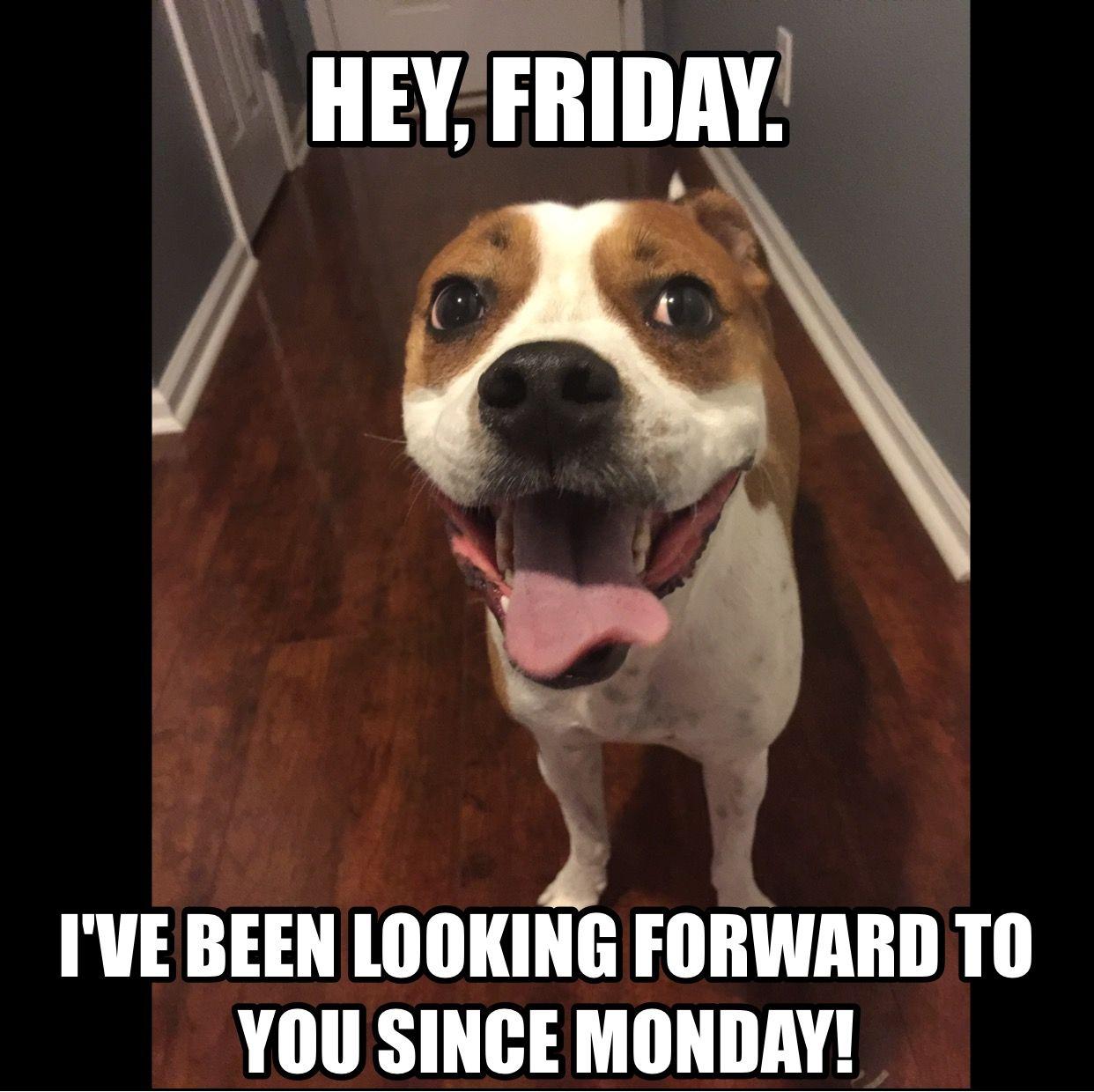 Love Him Friday Dog Funny Friday Memes Friday Humor