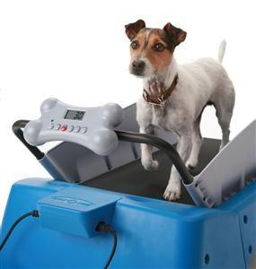 Tapis de course pour chiens