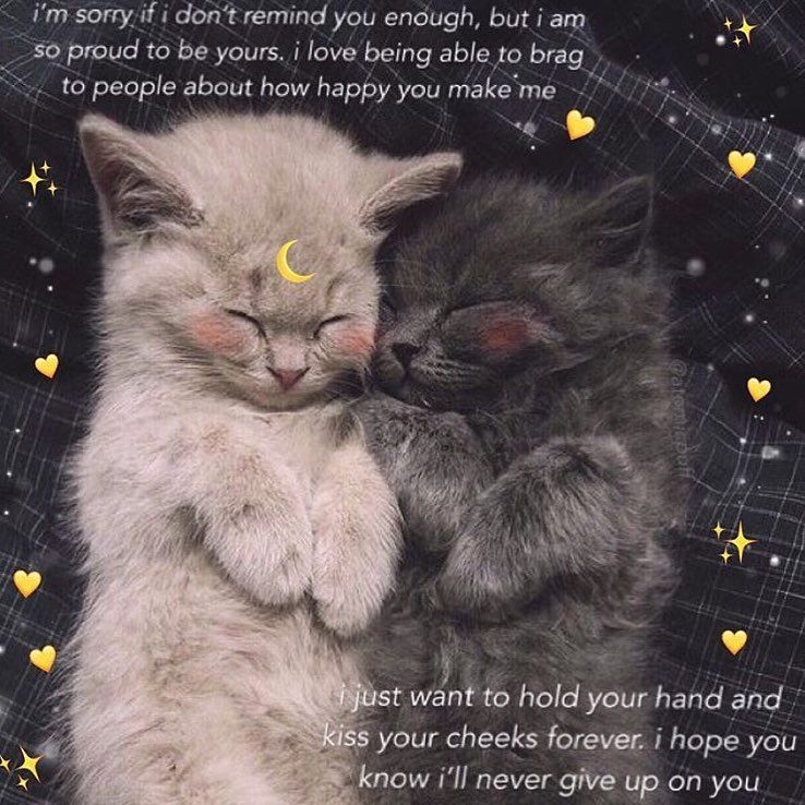 Follow Me For More Purememes Memes Selflove Selfcare Lovememes Positivevibes Wholesome Happy Cutem Cute Cat Memes Love Memes Love You Meme