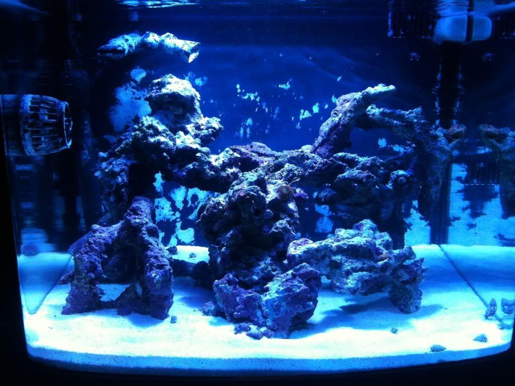 Nano Reef Aquascapes Google Search Nano Reef Tank Reef Tank Aquascape