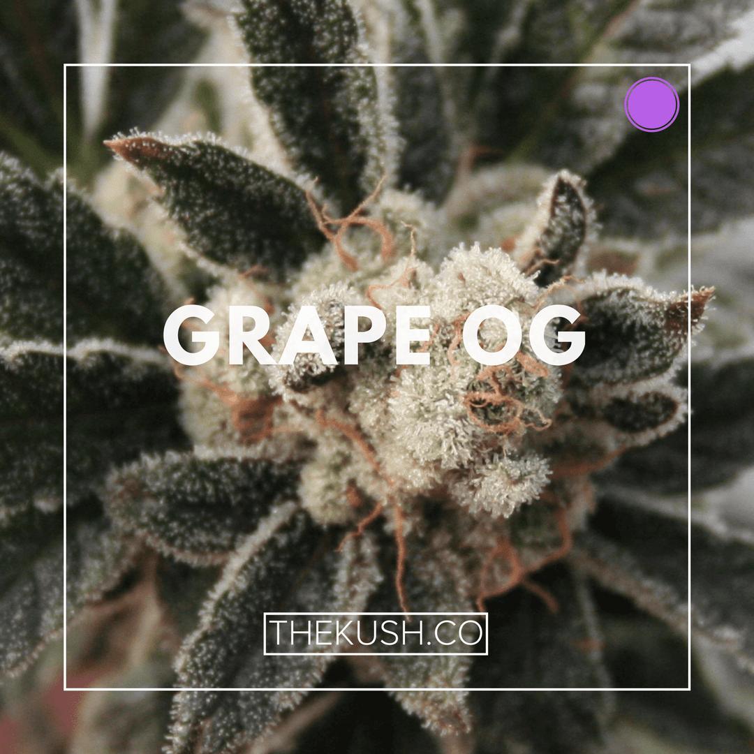 Grape OG, Photo credits: Double Dutch Farms