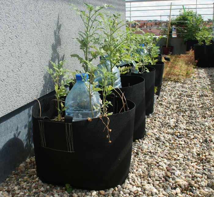 Arroser Ses Plantes En Vacances Au Secours Arrosage Jardin