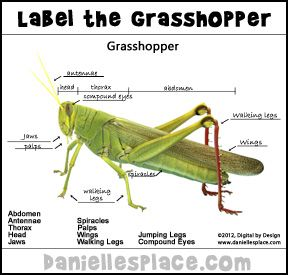 Label the Grasshopper Printable Activity Sheet from www ...