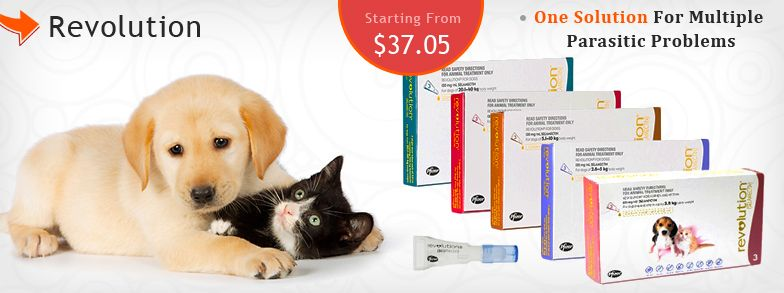 Canadapetcare Brings Special Discount On Revolution For Dogs And