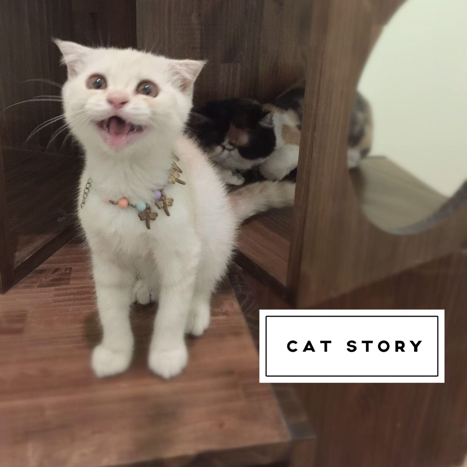 โรงแรมแมว Cat Story 5 Star Cat Hotel ห องพ กร บฝากแมวระด บพร เม ยม ด แลโดยส ตวแพทย ห องพ กไม ข งกรง ห องแอร ท กห อง ห องใหญ และ แมวเปอร เซ ย แมว กระบะทราย