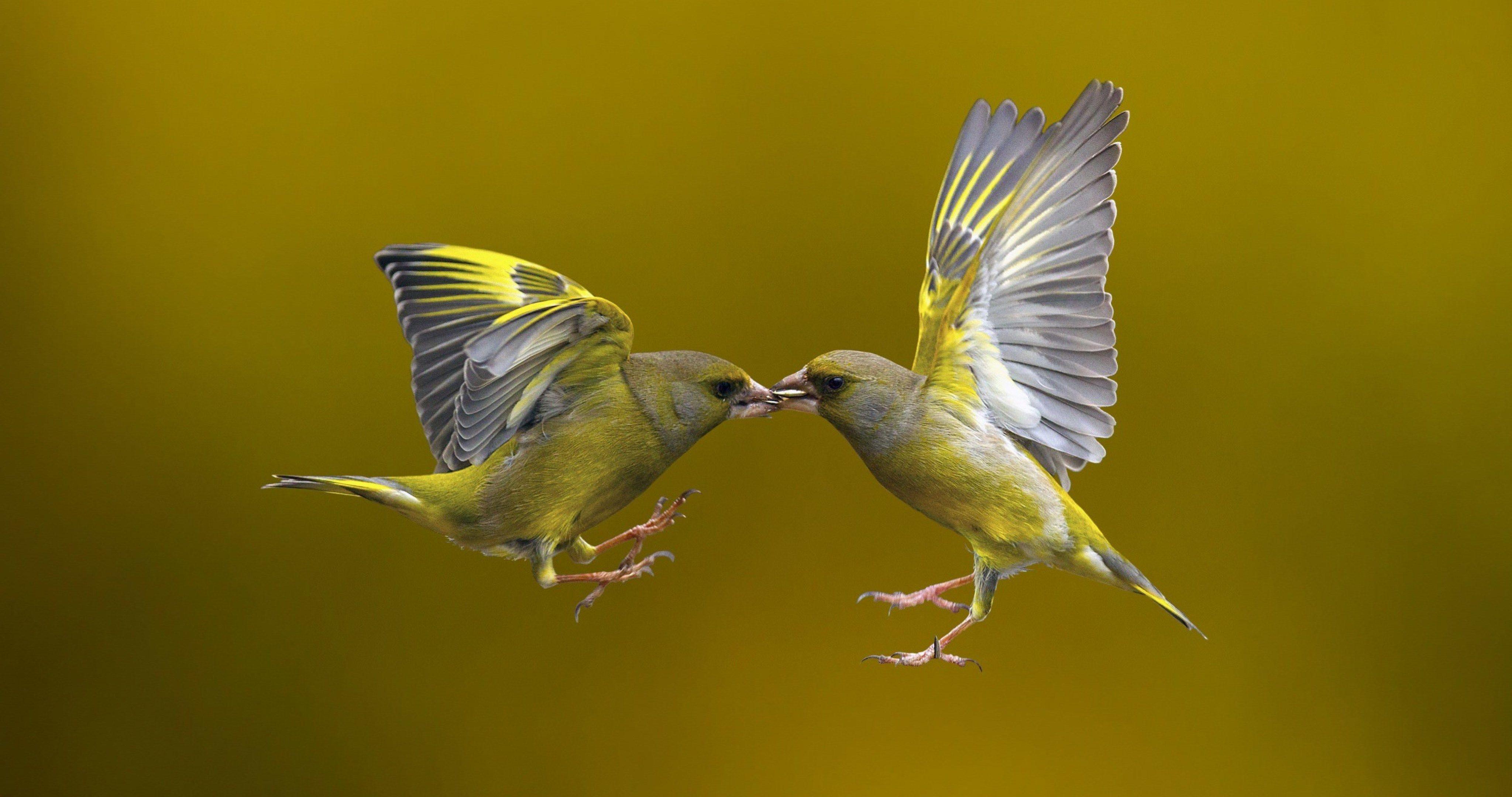 Hummingbird 4k Ultra Hd Wallpaper Bird Photography Bird Photo Birds Flying
