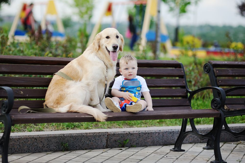 Ghim Của Friendly Golden Retriever Tren Golden Retrievers And Baby