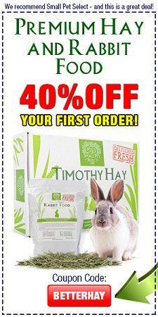 Top Tips On Training Your House Rabbit Rabbit House Rabbit Bunny