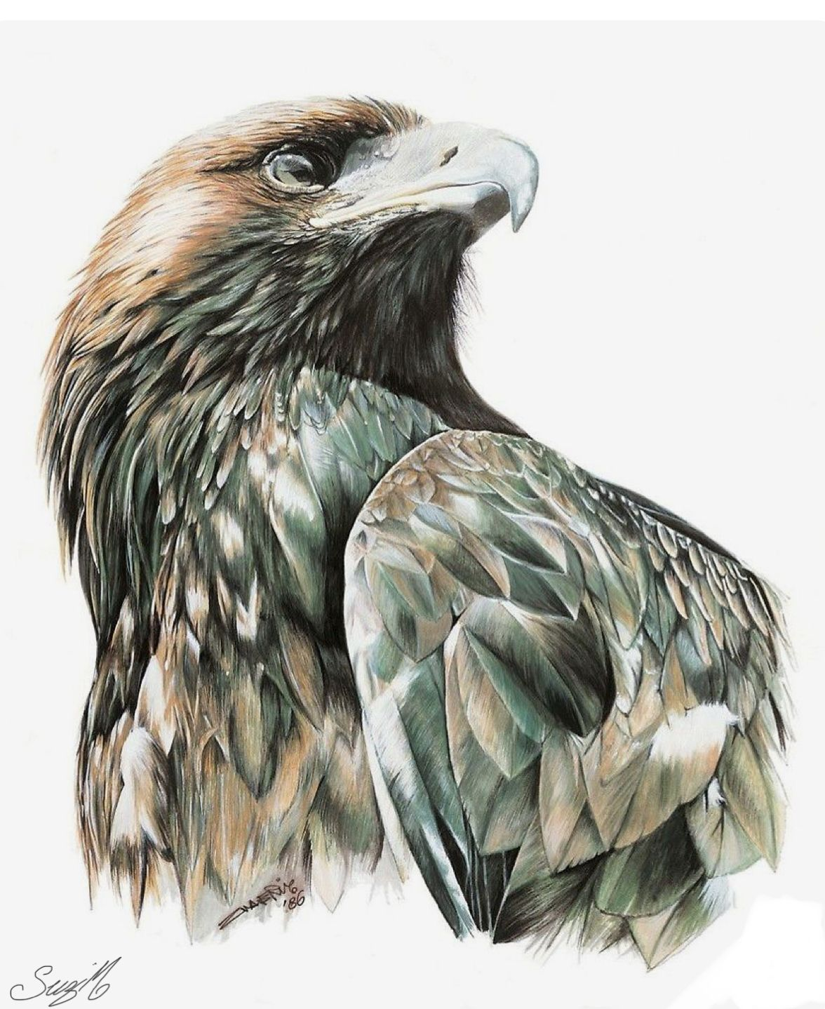 Pin By Syreese Bailey On Animal Paintings