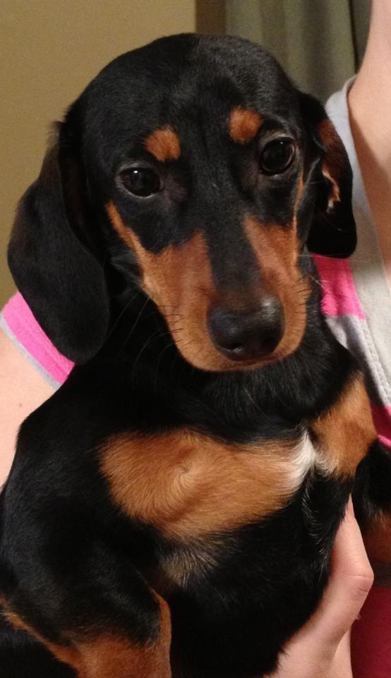 Charleston Wv Rescue Dogs