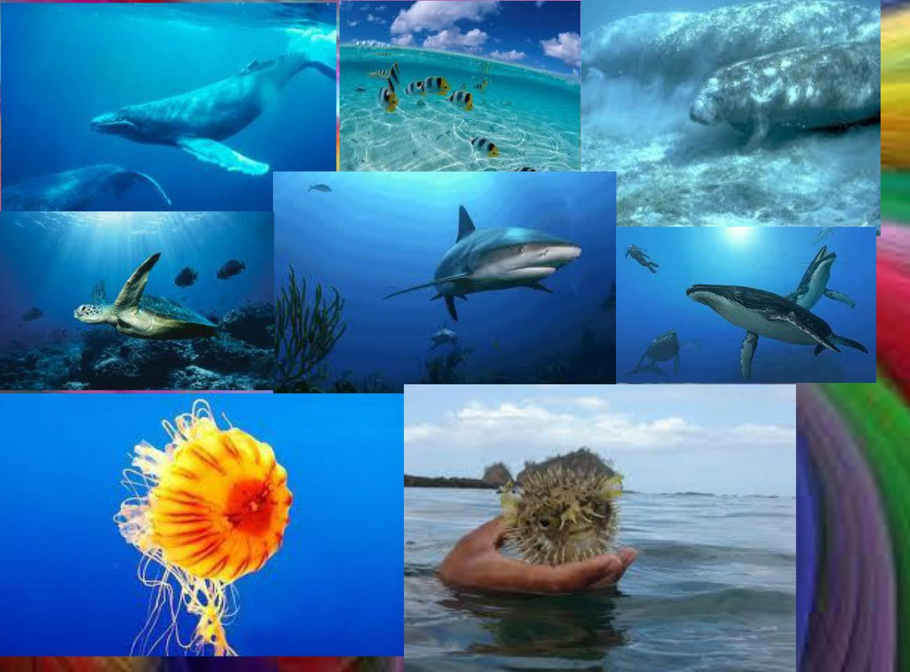 ocean biome - Google Search | Biomes | Pinterest | Biomes ...