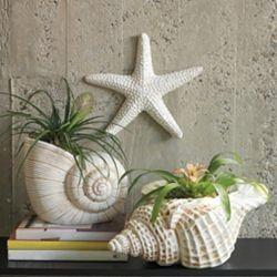 Sea Shell Decor   Shop home  Kaboodle
