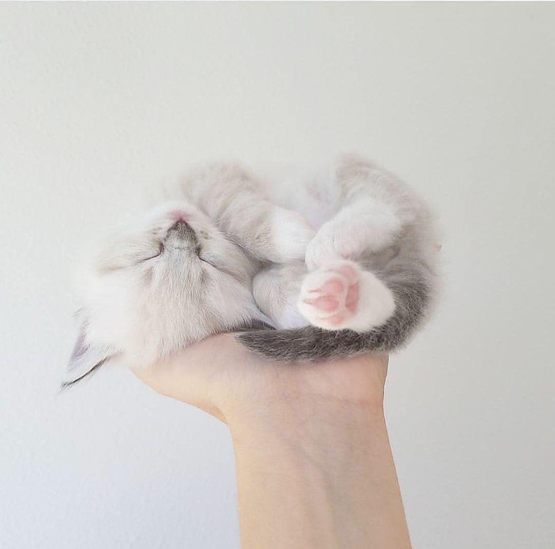 Cute Animals Whatsapp Status Video Download Much Kittens And