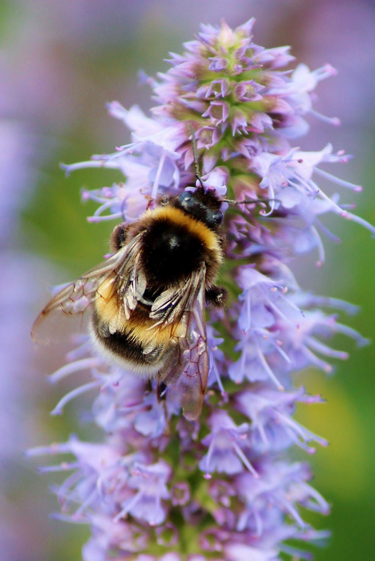 Pin by Jammie Teske on Bees Bee friendly garden, Bee