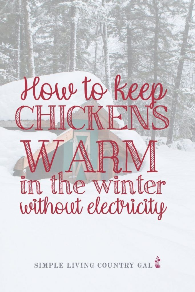 Tips on how to keep your chickens warm this winter ...