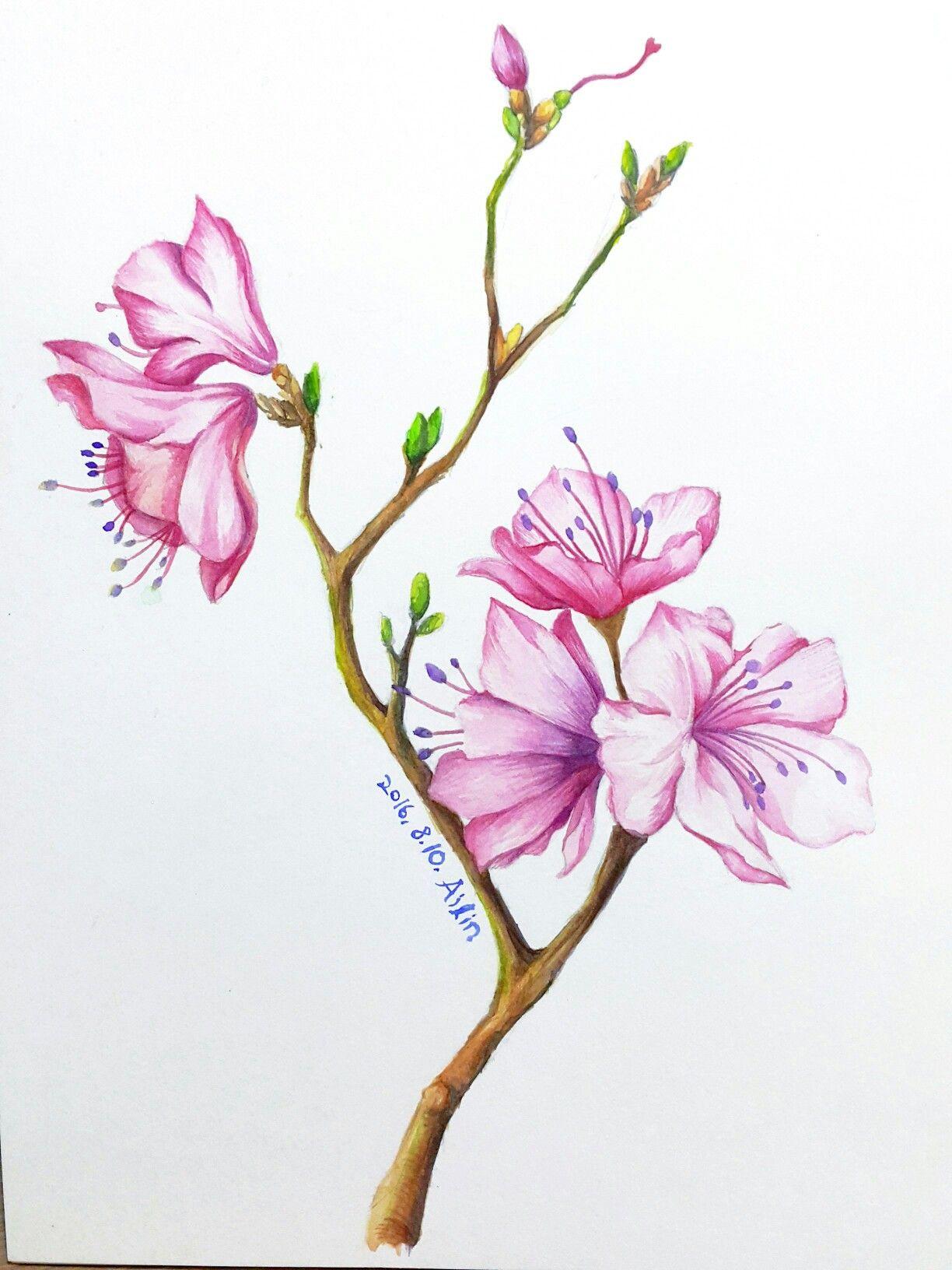 Watercolor. Azaleas. Botanical art. Flower art