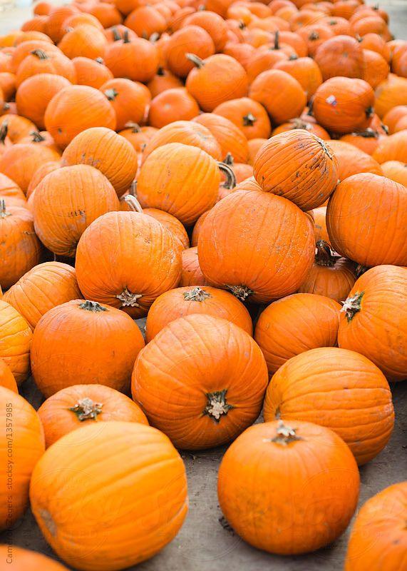 Pumpkin Patch Harvest Pick A Pumpkin Background Vintage Pumpkin Pumpkin Patch