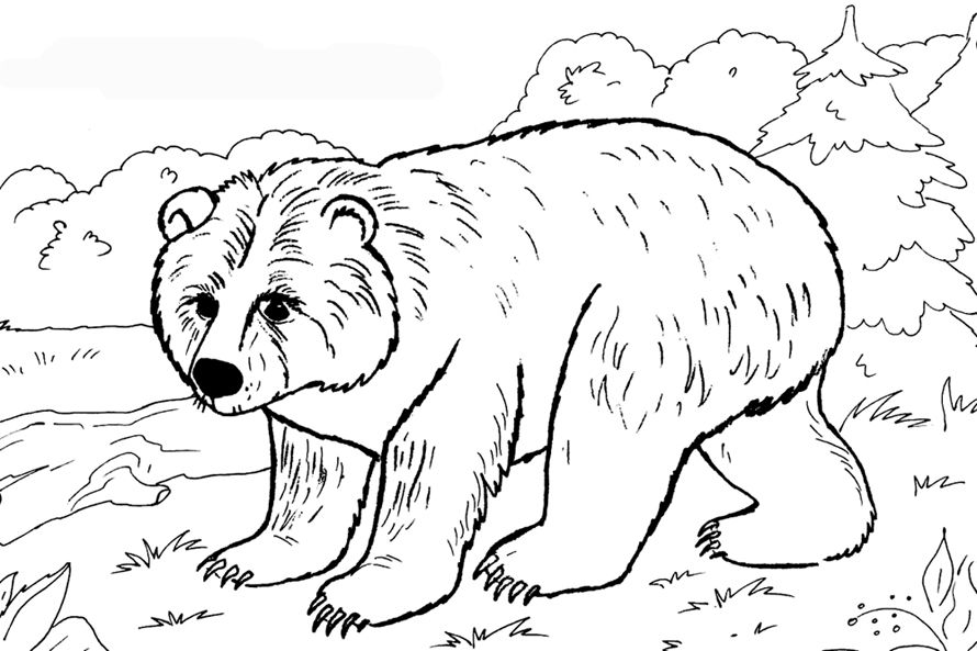 медведь картинка раскраска Animal Coloring раскраски с