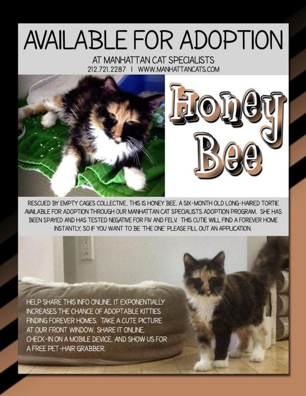 Adopt Honey Bee at Manhattan Cat Specialists #tortie