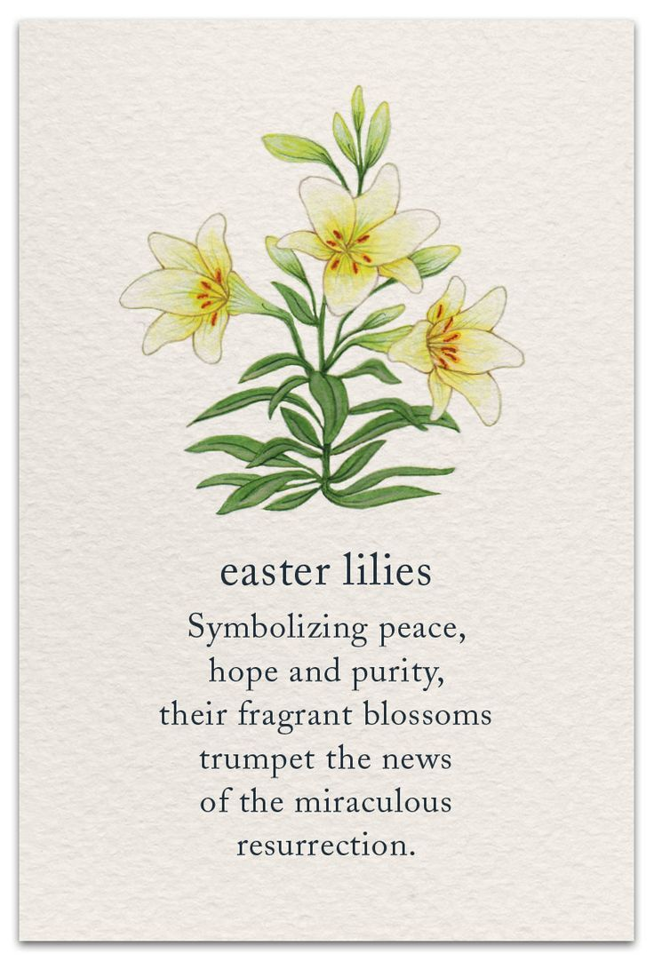 Easter lilies flower quotes language of flowers flower