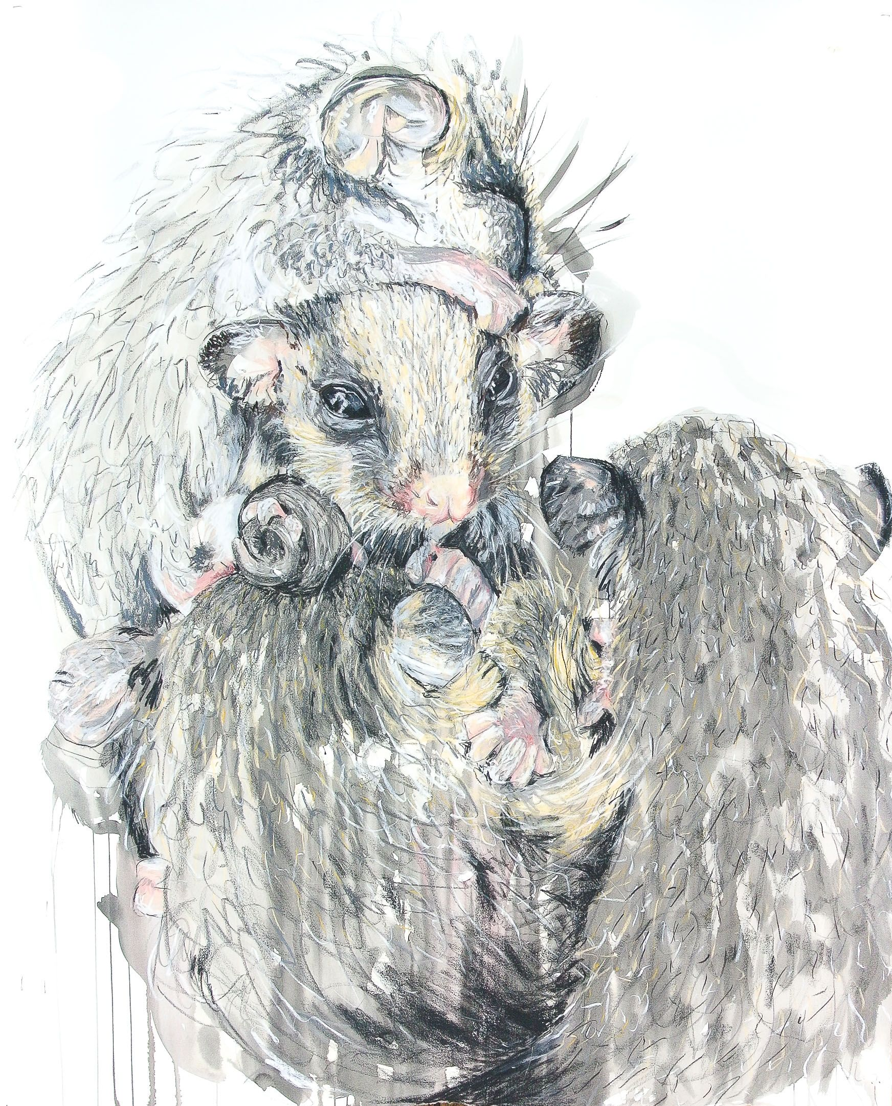 Meaghan Potter Eastern Pygmy Possum Babies 2017 Watercolour Ink