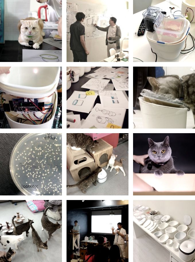 Pura A Smart Water Fountain For Cats Indiegogo Smart