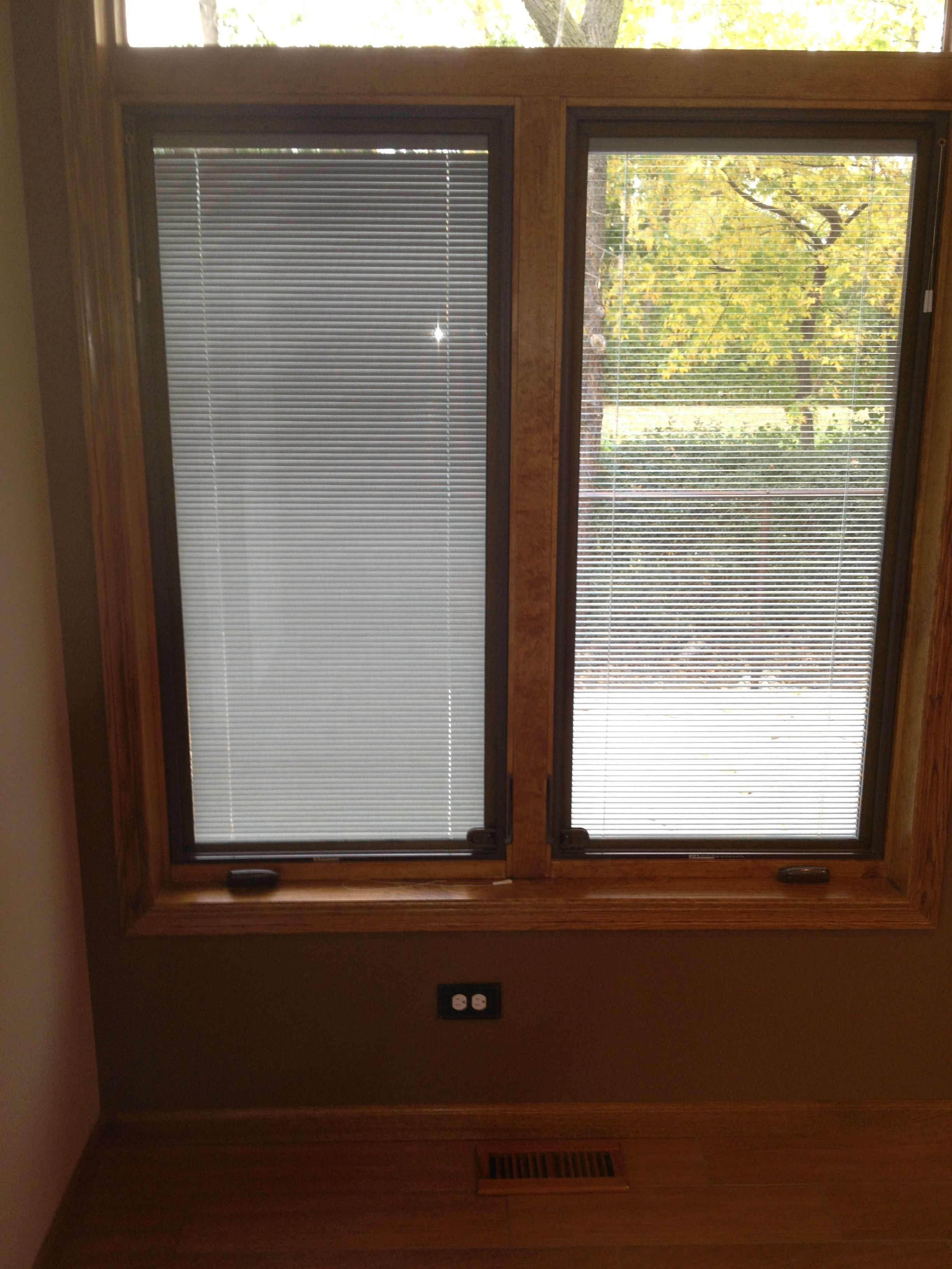 Here Is A Cat Window With Blinds In The Gl And They