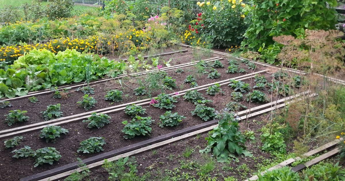 anbauplanung im gemüsegarten | winter, Garten und erstellen