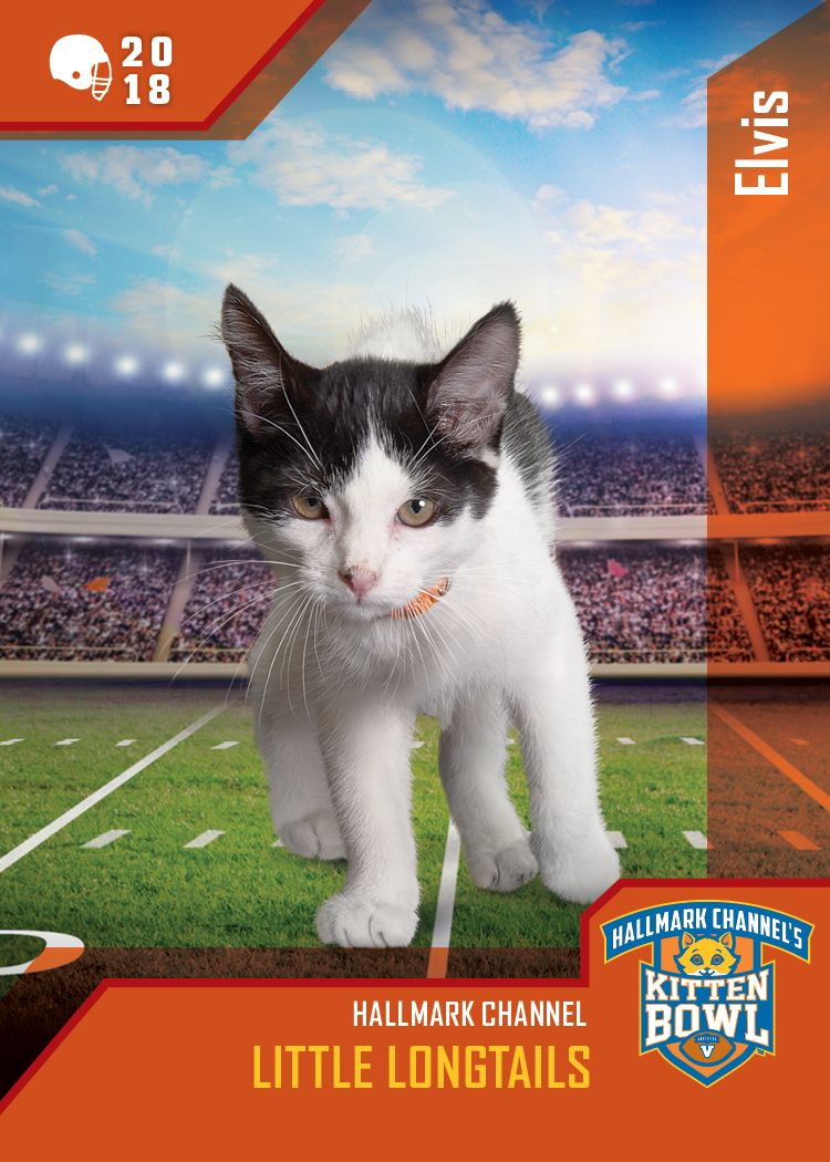 Kitten Bowl V Little Longtails Quartercat Elvis Can Shake Rattle And Roll Down Field Watch The Biggest Game In Hallma Kitten Bowls Hallmark Channel Kitten