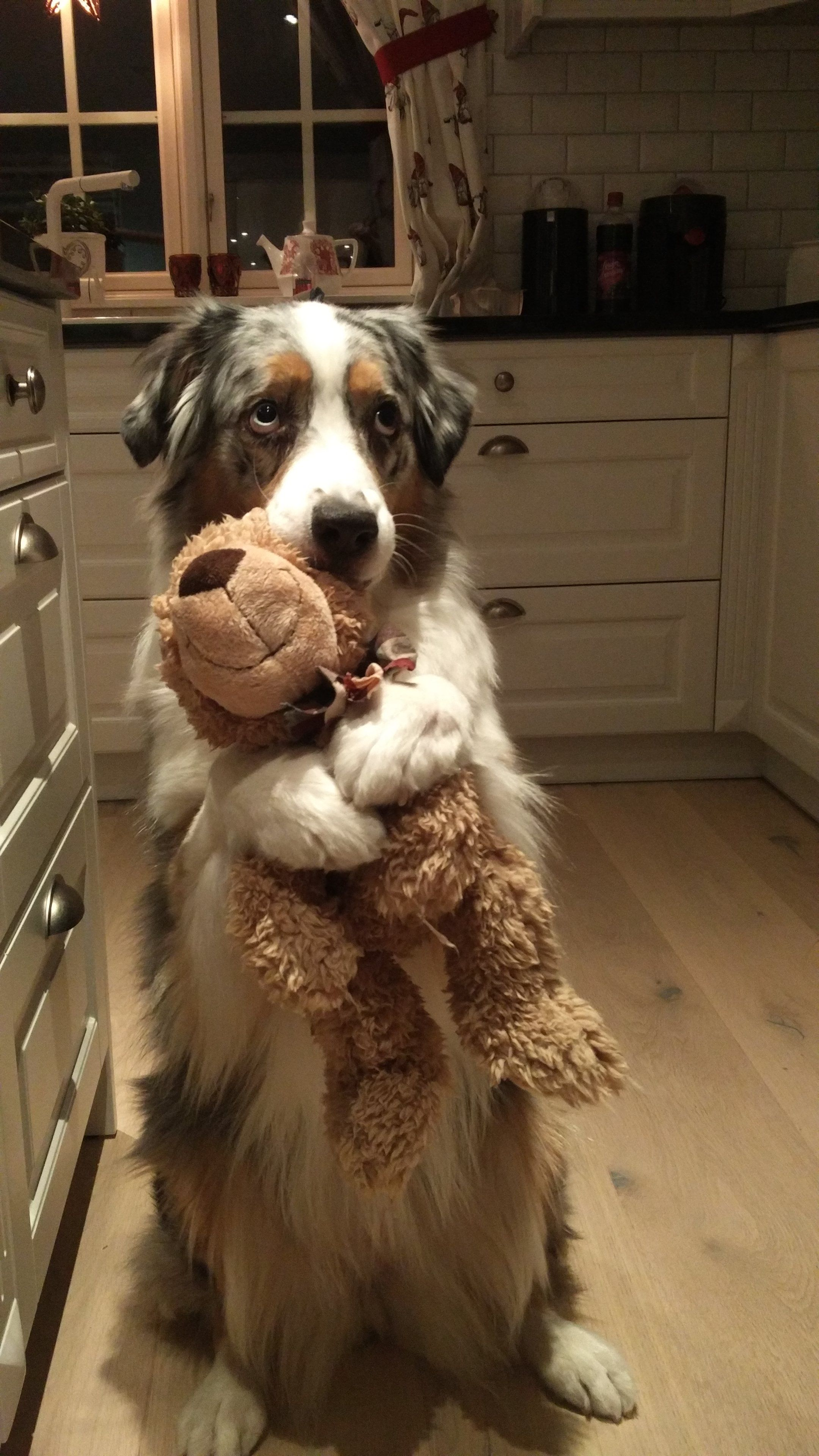 Dog hugging teddy. Not my image. Credit to http://imgur.com/user/YouThoughtThisWasAUsernameButItWasMeDio