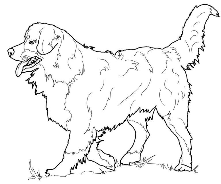 Dog Coloring Pages For Adults Dog Coloring Page Coloring Pages