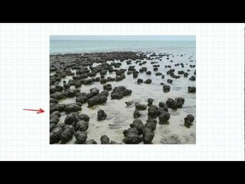 SPU 30 - Stromatolite Tutorial - YouTube