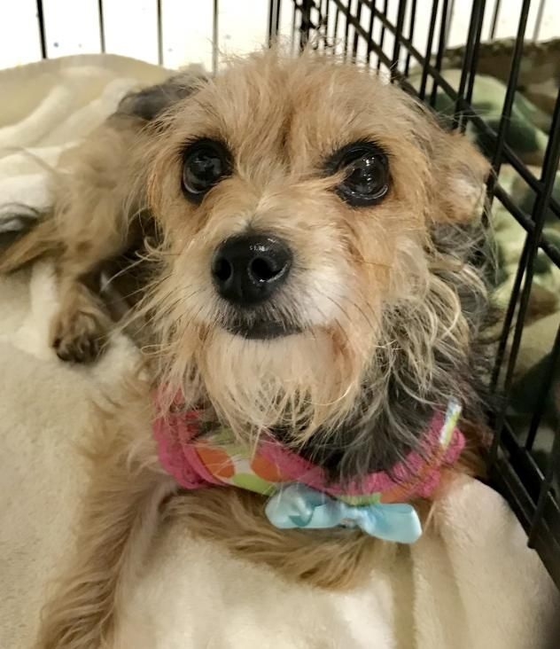 Losing A Dog, Terrier Mix Dogs