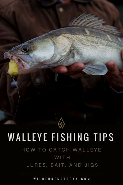 Easy Ways To Increase Your Fishing Success Walleye Fishing Tips