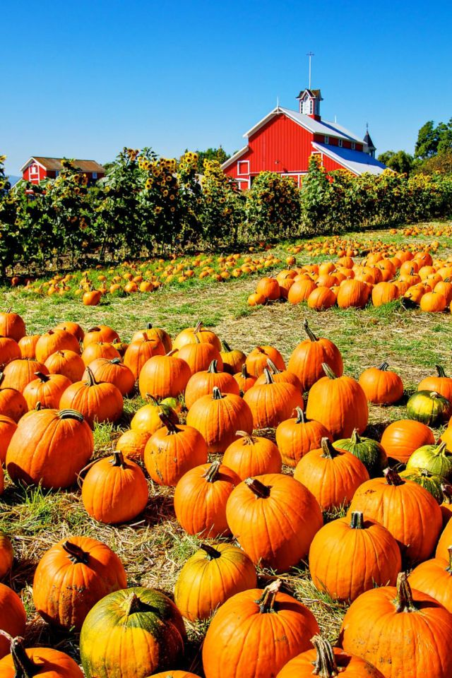 24 Reasons Fall is Best Spent in The Country Pumpkin
