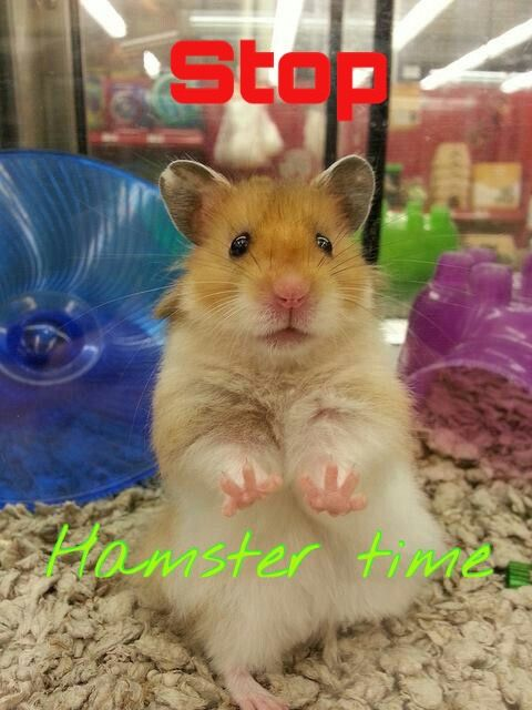 This Is So Cute With Images Cute Hamsters Funny Hamsters Hamster