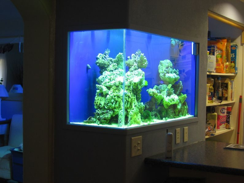 In wall aquarium kitchen reef workshop my style for Wall fish tanks
