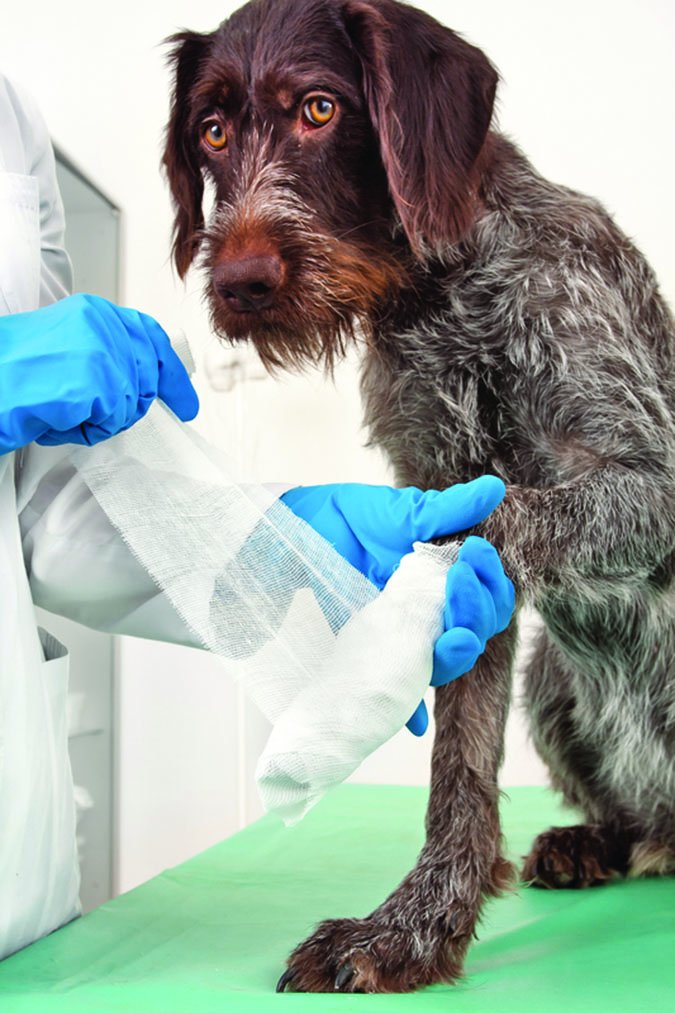 f0beaa19c614645a1b68719f45134a87 - How To Get Super Glue Off Dog S Paw