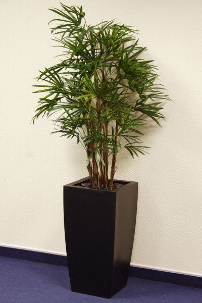 tropical office plants. Office Plants, Great Pot \u0026 Tropical Plants For Your Offices \u2014 Nature At Work