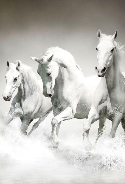 Parallax Wallpapers Com Horse Wallpaper Horses White Horses Black and white horse wallpaper hd